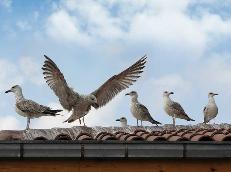 Bird Control Solutions Company Companies Based In Los