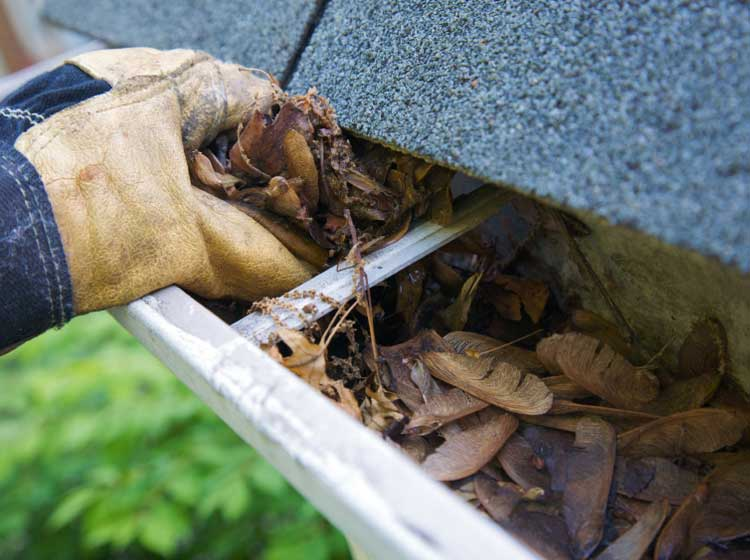 Rain Gutter Cleaning Service Company Companies Based In